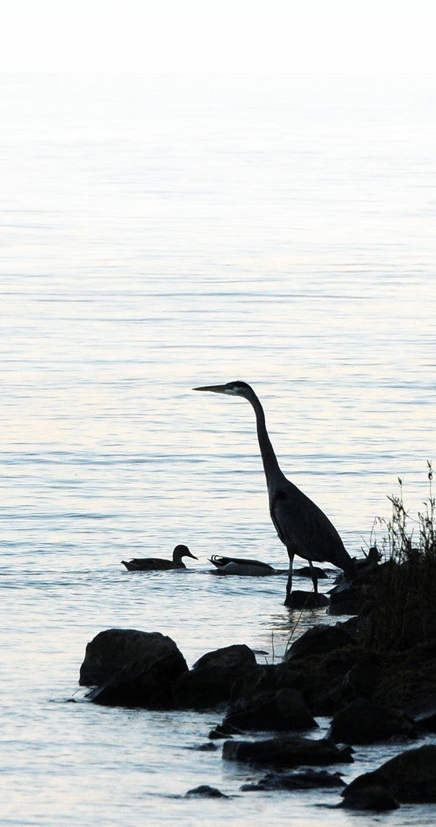 Abundant wildlife resides in and around Lake Guntersville